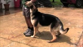 Miami Dog Whisperer Dog Trainers Academy