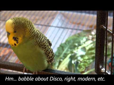 Baby Bird? Pretty Bird?