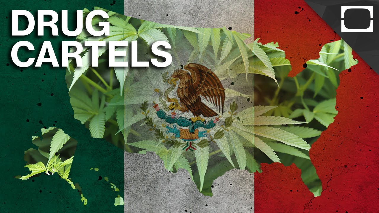 Is Legal Marijuana Threatening Mexican Drug Cartels? | Doovi