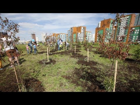 В Академическом высадили первые 500 деревьев нового парка