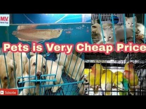 Crawford Market Mumbai | Pets in Cheap Price| in hindi 2018