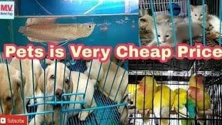Crawford Market Mumbai   Pets in Cheap Price  in hindi 2018