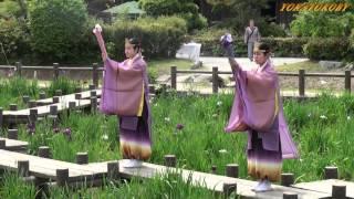 宮地嶽神社 菖蒲まつり(江戸菖蒲初刈り神事)