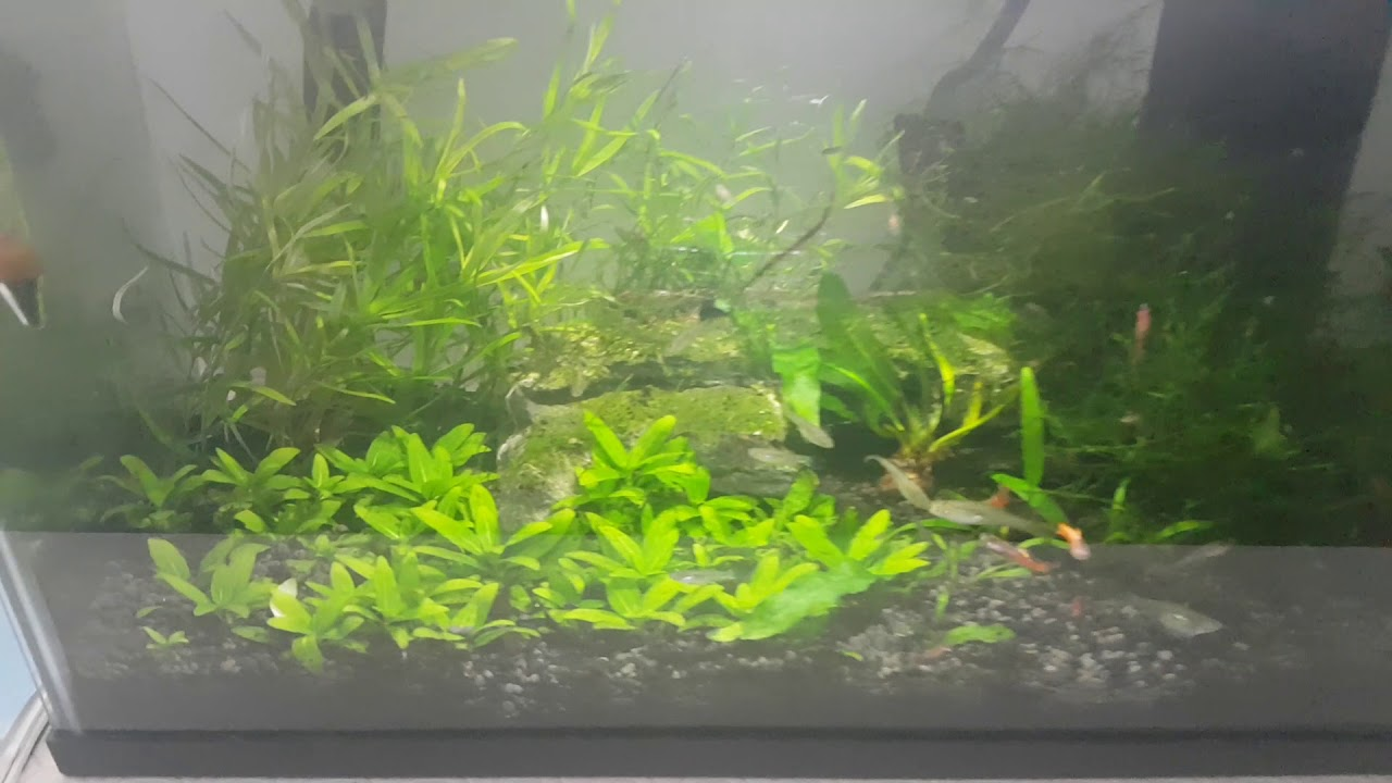 seachem flourish tabs after 4 months in the 5g planted tank youtube