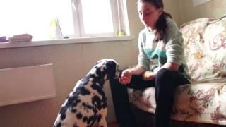 Как Научить Собаку Команде Сидеть с Кликером И без него!