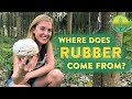 Where does Rubber come from? | Maddie Moate