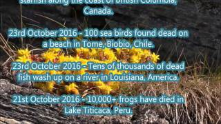 THE BEGINNING OF THE END ... October 2016 Mass Animal Death List