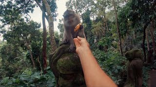 Bali Through My Eyes (POV) - GoPro HERO 6 (AWARDS WINNER)
