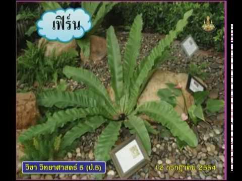 054+540712+scip5+dltv54p+B+ตัวอย่างพืชไร้ดอก