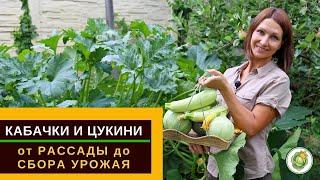Кабачки и цукини - от рассады до сбора урожая//все секреты выращивания и ухода