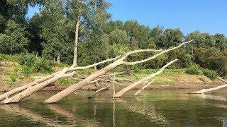 РЫБАЛКА В КОРЯЖНИКЕ. Рыба стоит под дровами. Ловля щуки на реке