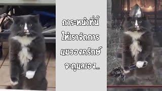 ความรู้สึกของแมวเมื่อเจอคู่อริ ตัดต่อเทพมาก... #รวมคลิปฮาพากย์ไทย
