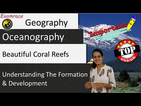 Beautiful Coral Reefs: Understanding the Formation & Development