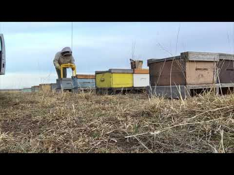Grouping and Moving out Bee Yards