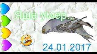 Попугай умер.. Яша, прости.😭