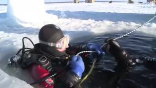 ice diving in russia arctic circle free diving with beluga whale