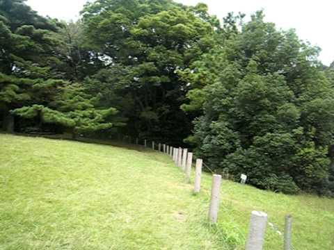 20081019明治神宮寶物殿前大草坪