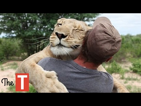 Thumbnail: 10 Unbelievable Animals That SAVED People's Lives