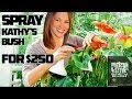 Spray Kathy's Bush for $250 - Preston & Steve's Daily Rush