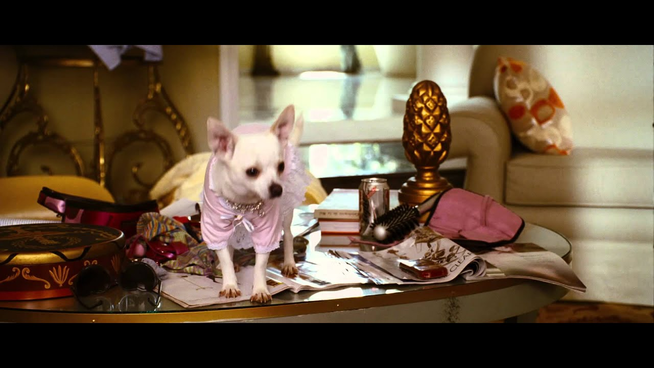Beverly Hills Chihuahua - YouTube