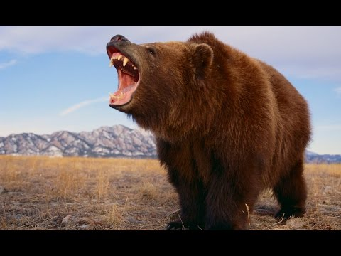 The Grizzly River - Grizzly Bears Documentary - History TV