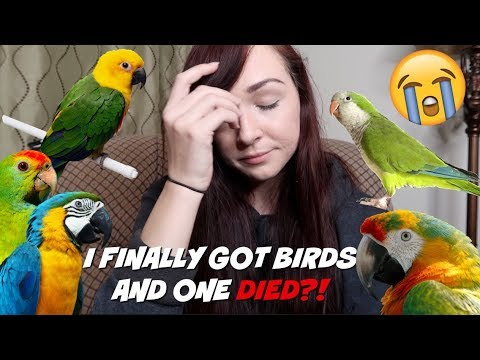 I FINALLY GOT BIRDS AND ONE DIED?! | MEET MY NEW PET BIRDS | Storytime