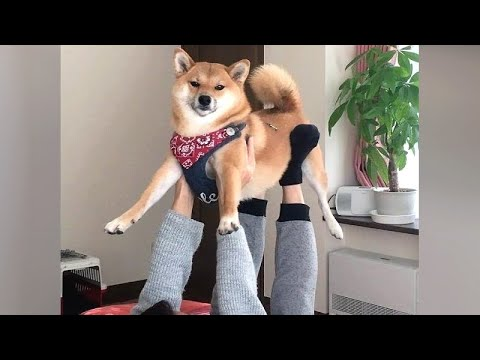 Funny DOGS showing EMOTIONS and other FUNNY DOG VIDEOS!