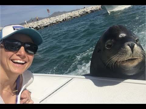 Cabo | Deep Sea Fishing & Poncho The Sea Lion!!!