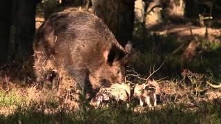 """""""Borninfreedom"""" Wildlife Veluwe movie"""