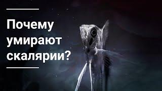 Болезни рыб - причина гибели рыб в аквариуме/ Fish diseases - the causes of death of fish