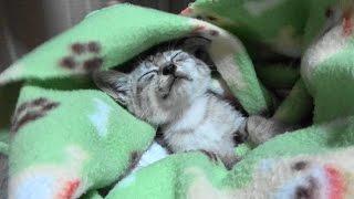 野良子猫 雨の夜にやって来た男の子 thumbnail