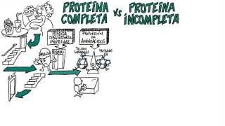 Complete Protein VS Incomplete Protein