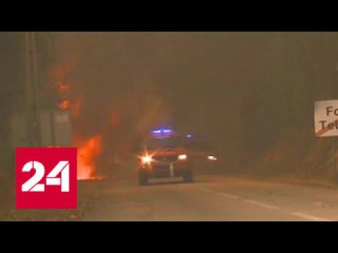 62 погибших, 135 пострадавших: страшный итог лесного пожара в Португалии