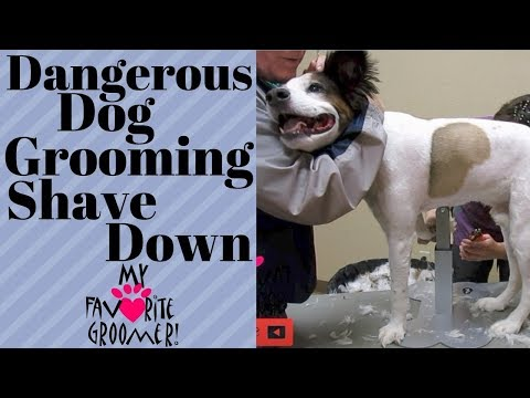 My Dog will bite the Groomer