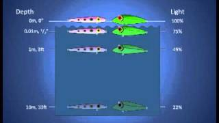Fishing Lure Color Selection (Part 1). How Colors Look Underwater