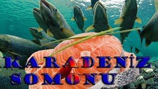 Karadeniz Somonu,Gökkuşağı 🌈 Alabalığı