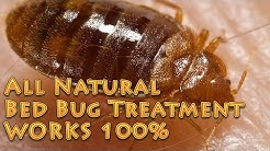 ALL Natural Bed Bug Treatment  Works 100% no harsh chemicals