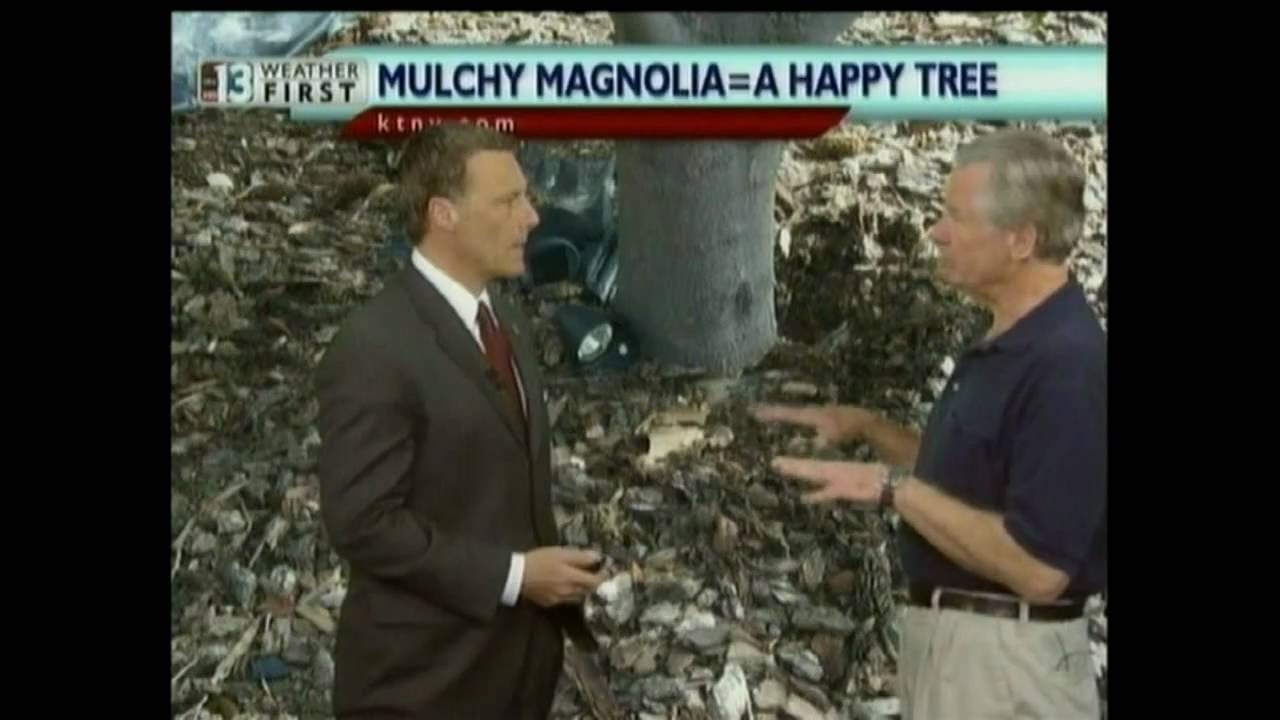 Can You Grow Magnolia Trees In The Desert Youtube