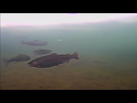 """Зимняя форелевая рыбалка. Рестпарк """"Академия Отдыха"""", Одесская обл., с. Красноселка."""