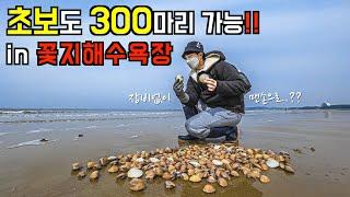 맨손으로 조개 300마리 잡기‼️태안 해루질 포인트 |…