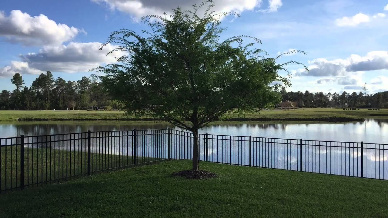 how to get rid of elm trees