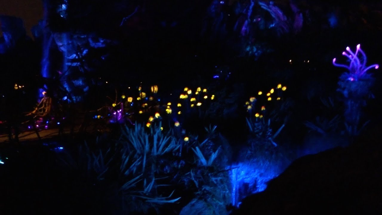 Valley Of Moara At Night Pandora