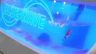 BlueWave Boats Live bait tank