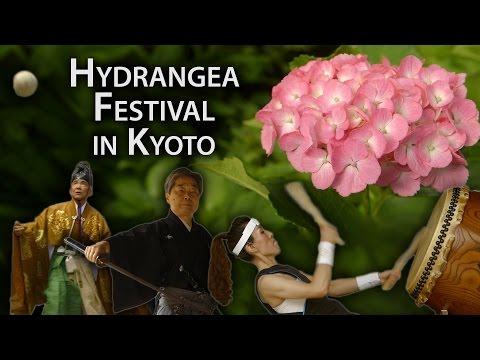 Kyoto Festival: Hydrangea Celebration at Fujinomori Shrine (Ajisai Matsuri)