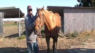 The difference between Horse Abuse and Horse Correction - Part 2 - Rick Gore Horsemanship