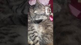 Кот привел домой кошку