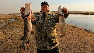 Так ловили рыбу наши деды ЛОВЛЯ ЩУКИ НА КРИВДУ Испытываю новую снасть