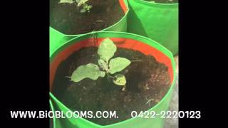 Terrace / rooftop organic vegetable gardening tips - fertilizer