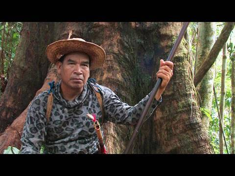 The Forbidden forests of the Dayak, Borneo, Indonesia