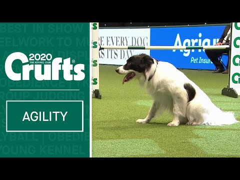 Agility  Crufts Team Large Final - Part 2 | Crufts 2020